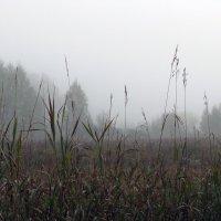 Утро туманное ... :: Татьяна Ким