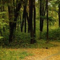 Осенние прогулки ... :: Игорь Малахов