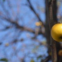 дикая яблоня :: xcom xcom