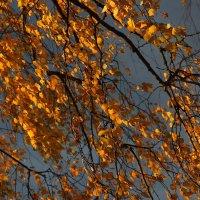 Цвет осени. :: Victor Klyuchev