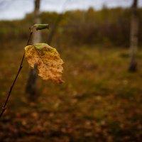 Осенний лист :: Роман Царев