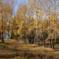 Осенние тополя :: Наталия Григорьева