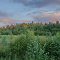 Пасека на поляне :: Валерий Талашов