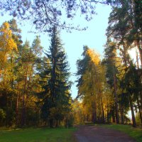 Лесной октябрь :: Вячеслав Минаев