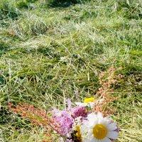 Цветы :: Xenia Togacheva