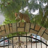 Добро пожаловать в Грецию :: Лев