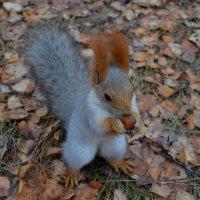 Как орешки хороши :: Таня Фиалка