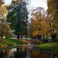 Разноцветная осень :: Евгения Кирильченко