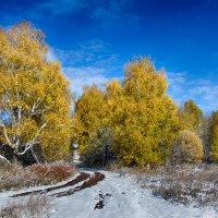 После первого снега :: Константин Филякин