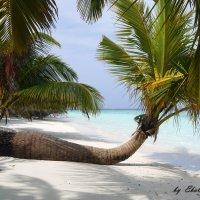 Мальдивы 17 :: Ekaterina Stafford