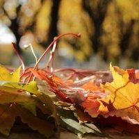 Осень :: Татьяна Баценкова