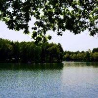 Пруд в Измайловском  парк :: Владимир Болдырев