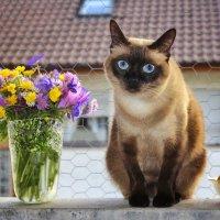 Голубоглазка... :: Svetlana Sneg