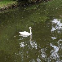 Прекрасные птицы-2. :: Руслан Грицунь