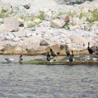 Морские птицы-14. :: Руслан Грицунь