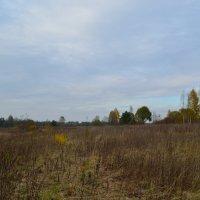 Осень печальных красок палитру... :: Алексей К