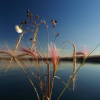 Вот закончилось теплое лето и завяли цветы на лугах... :: Александр Попов