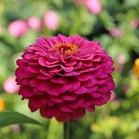 В саду :: leoligra