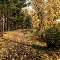 Осенний лес :: Наталия Григорьева