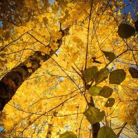 Осень :: Илья Шипилов