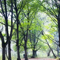 По осеннему парку :: Ирина A