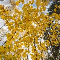 Золотая осень :: Роман Домнин