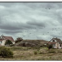 вороны :: Sergey Bagach