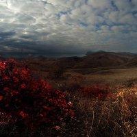 Осенняя прогулка :: viton