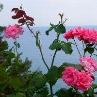 На фоне моря... :: Светлана Игнатьева