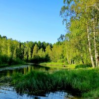 Дачная речка :: Светлана