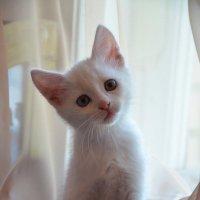 Котенок :: Оксана Пищайкина