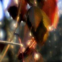 Моноклевая  осень... :: Валерия  Полещикова