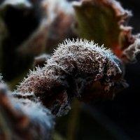 Осень... :: Евгения Каравашкина