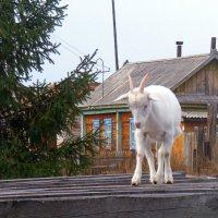 Толи я горная коза, толи нет... :: Татьяна Щёлкина