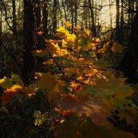 прогулки по осени :: sergej-smv