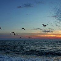 Закат и чайки :: Виолетта