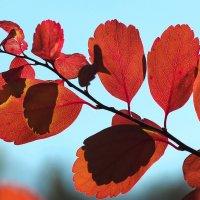 Осень волшебница :: Swetlana V