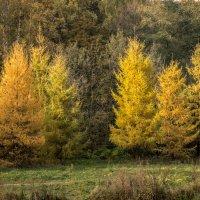 Осенний лес :: Elena Ignatova