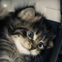 Манька ещё малявка... :: Olga Kramoreva