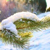 В преддверии зимы :: Lea Lea