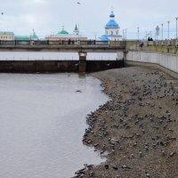 Воронья сходка :: Ната Волга