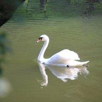 Прекрасные птицы-8. :: Руслан Грицунь