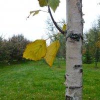 Осень в парке Победы :: Наиля