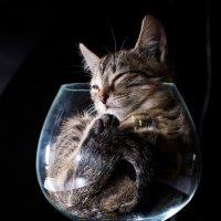 В стеклотаре... :: Sergey Apinis