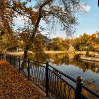 Прогулки по осеннему парку :: Сергей Мурзин