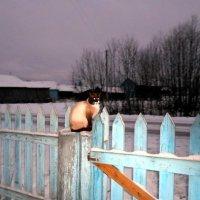 Сумеречный кот :: Николай Туркин