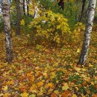 Продолжение Золотой Осени у дома :: Андрей Лукьянов