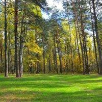 Зеленое покрывало октября (1) :: Милешкин Владимир Алексеевич
