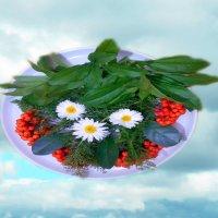 Летающая тарелка :: Татьяна Щёлкина