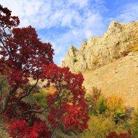 Скумпия,украшение Крымских гор. :: Геннадий Валеев